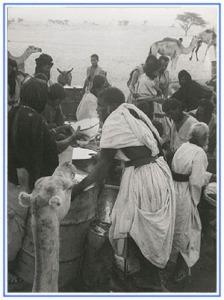 Sahrauís reciclando