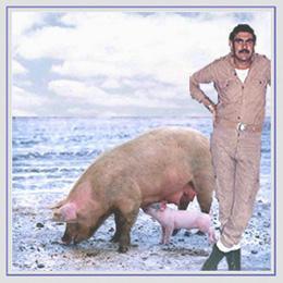 Els porcs del destacament ?